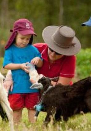 Animal Farms - Bush Kidz Child Care Centre Brassall Program